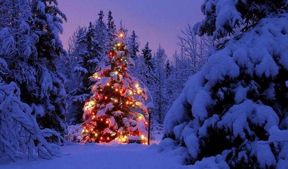 12252013 - christmas-tree-snow-1