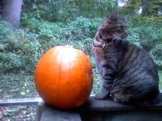 09292014 - KittyPumpkin