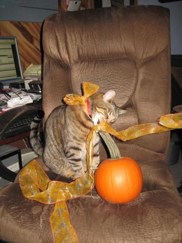 2010 Halloween Nylis 005