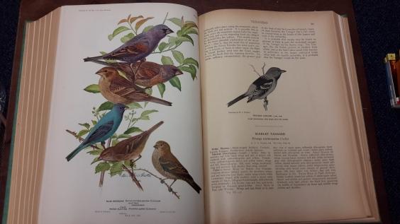 12032016-birds-america-inside2