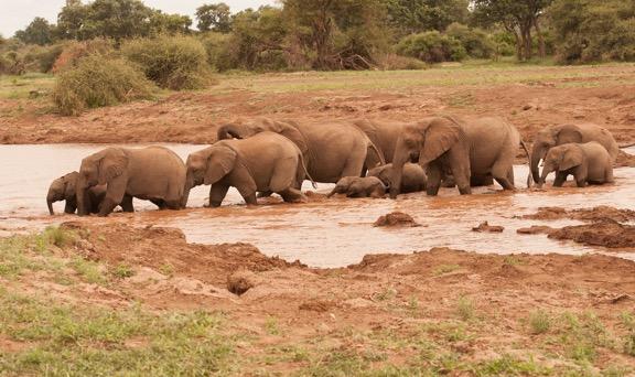 04072017 - Elephant Family (1 of 1)-10