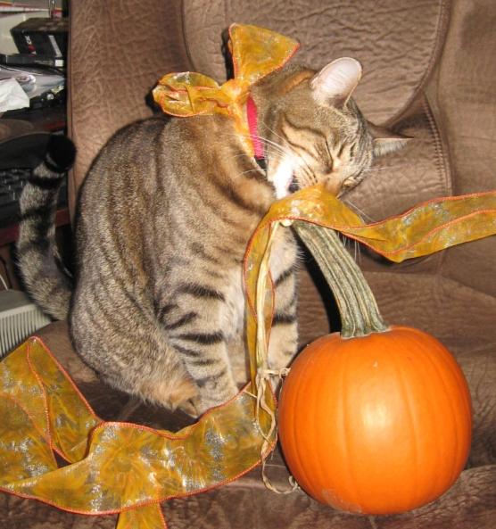 Nylis and Pumpkin