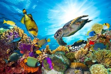 aquatic crafts