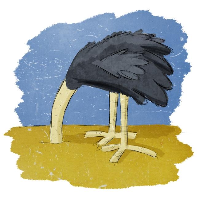 03122018 - ostrich