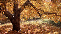 10302017 - Quabbin leaves