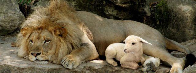 A-Lion-or-A-Lamb-1600x600