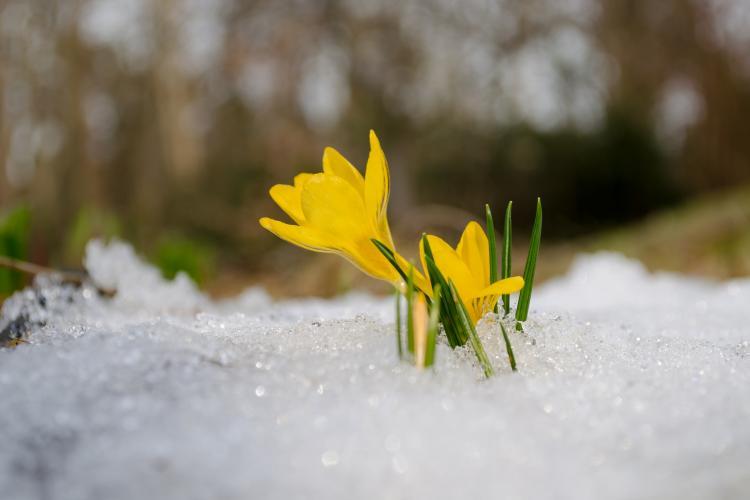 spring-equinox-ten-things